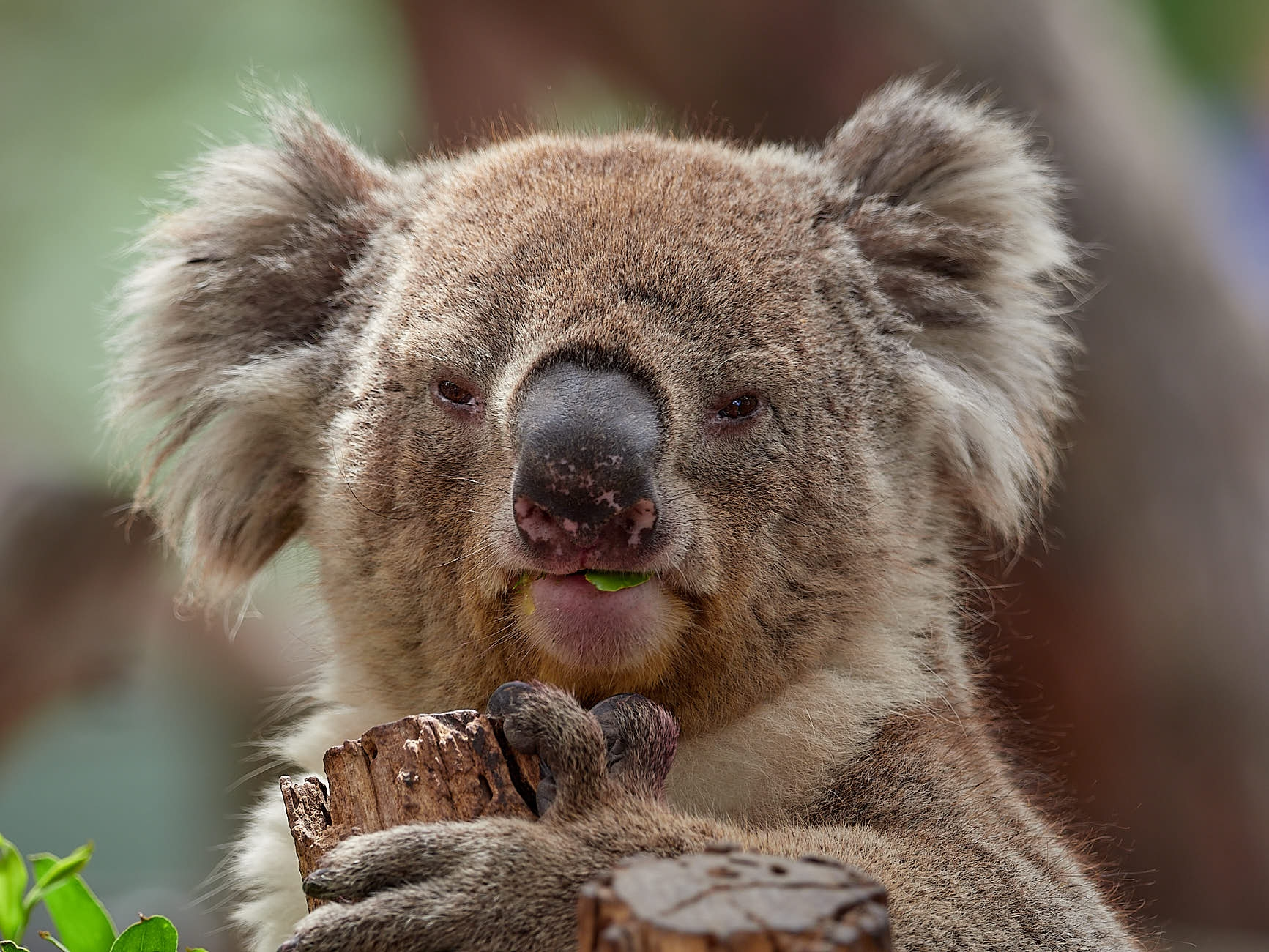 ames Pyne Photography Melbourne, Frankston, Somerville & Mornington Peninsula Photographer